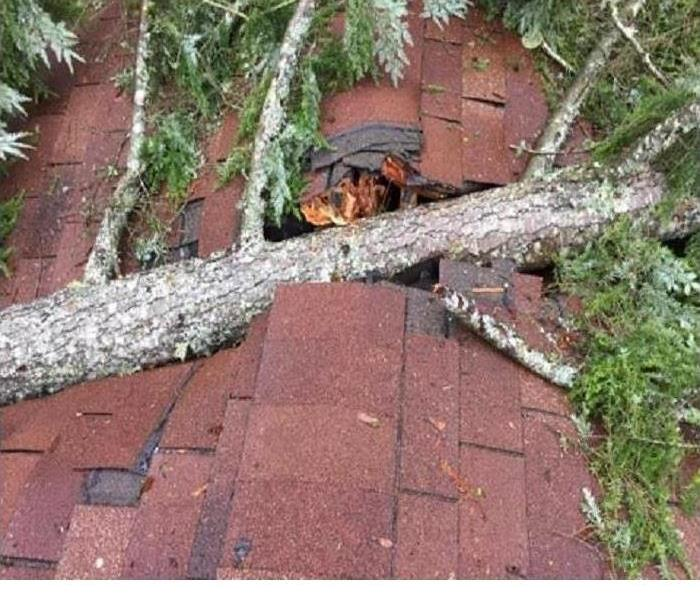 A tree is shown after falling on a roof
